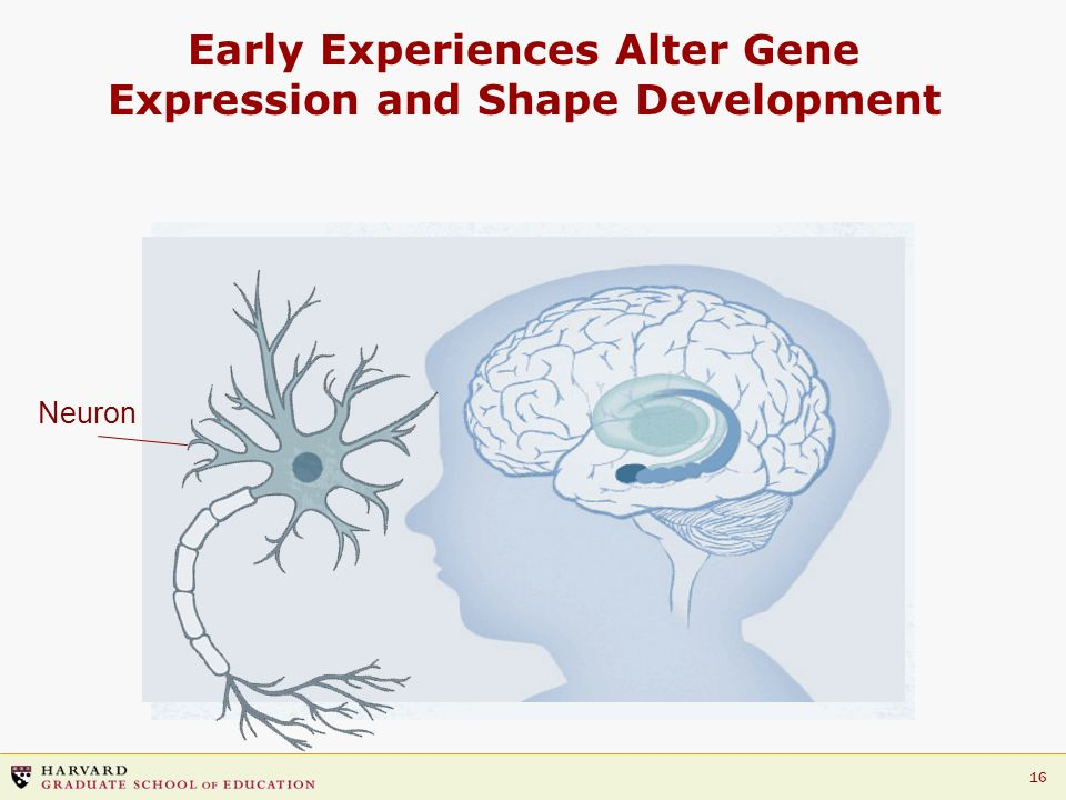 Early Experiences Alter Gene Expression and Shape Development