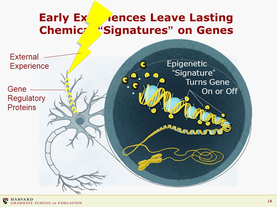 Early Experiences Leave Lasting Chemical Signatures on Genes