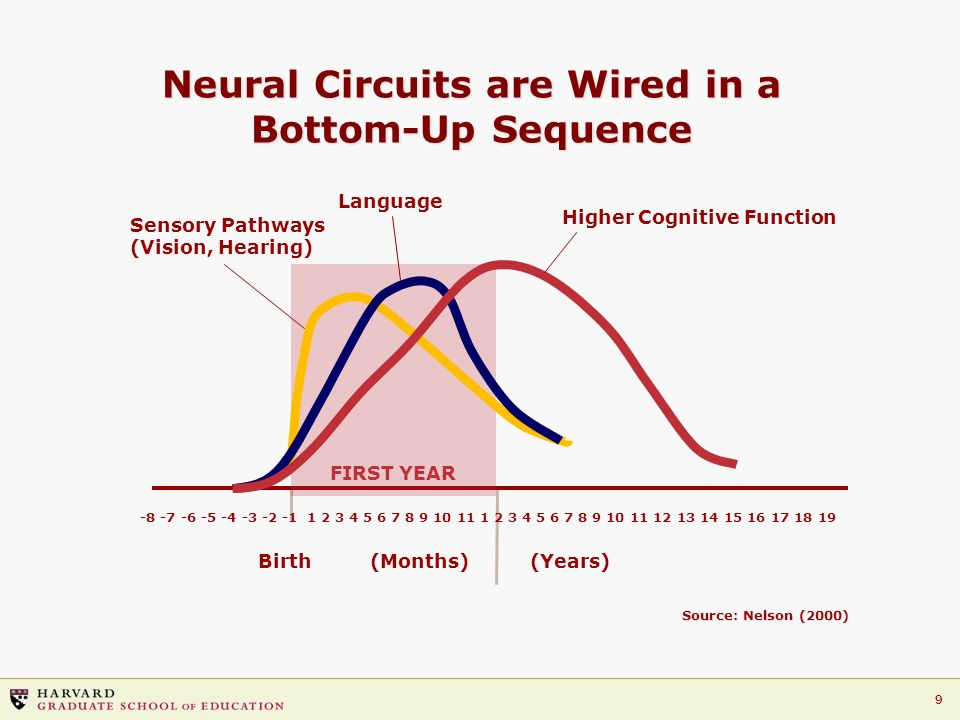 Neural Circuits are Wired in a Bottom-Up Sequence