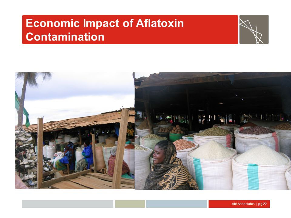 Economic Impact of Aflatoxin Contamination