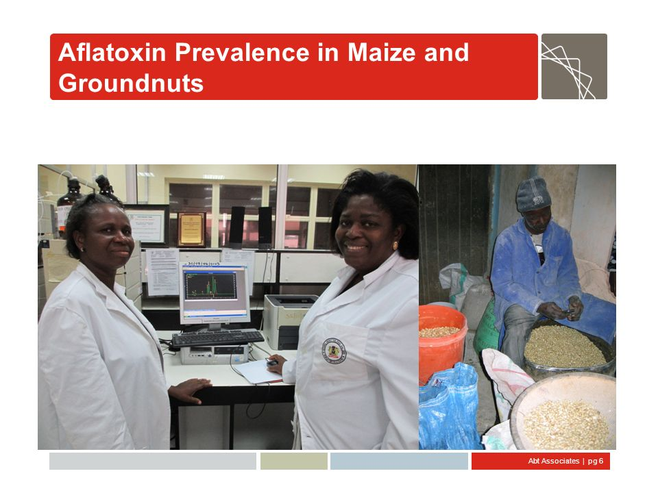 Aflatoxin Prevalence in Maize and Groundnuts