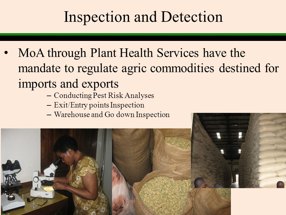 Inspection and Detection