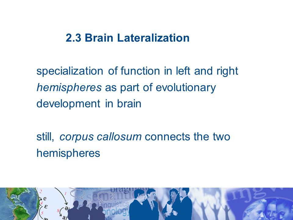 concept of lateralisation of function in the brain Brain function lateralization is evident in the phenomena of right- or left-handedness and of right or left ear preference, but a person's preferred hand is not a clear indication of the location of brain function.
