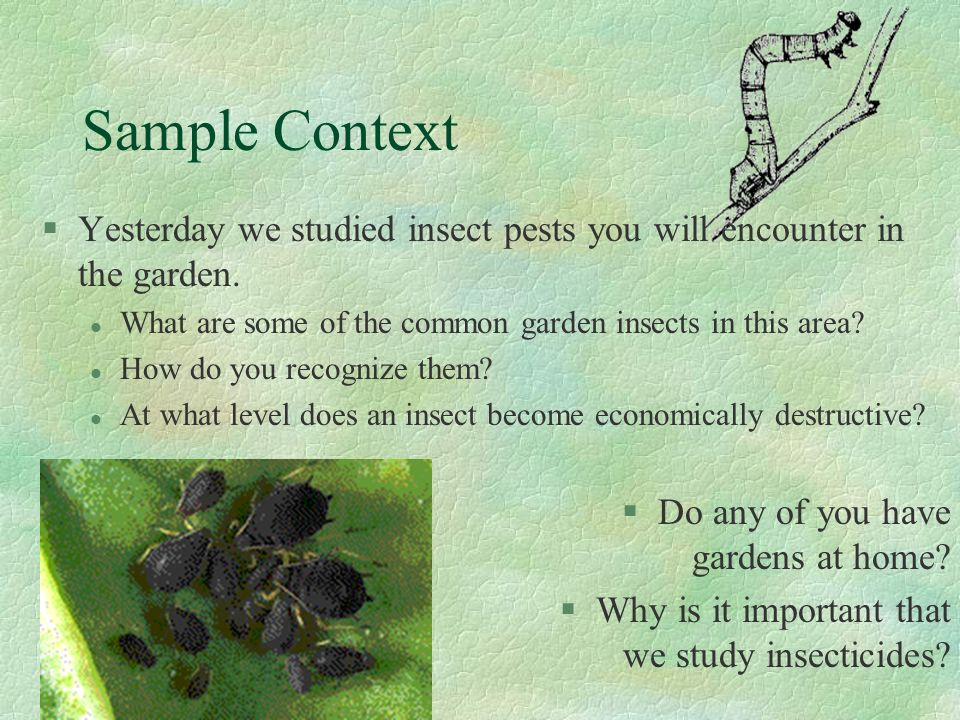 Sample Context Yesterday we studied insect pests you will encounter in the garden. What are some of the common garden insects in this area