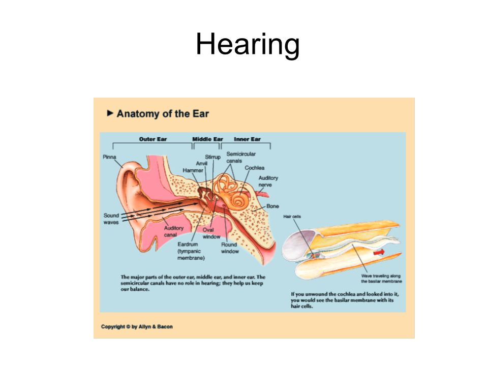 Hearing 2 2