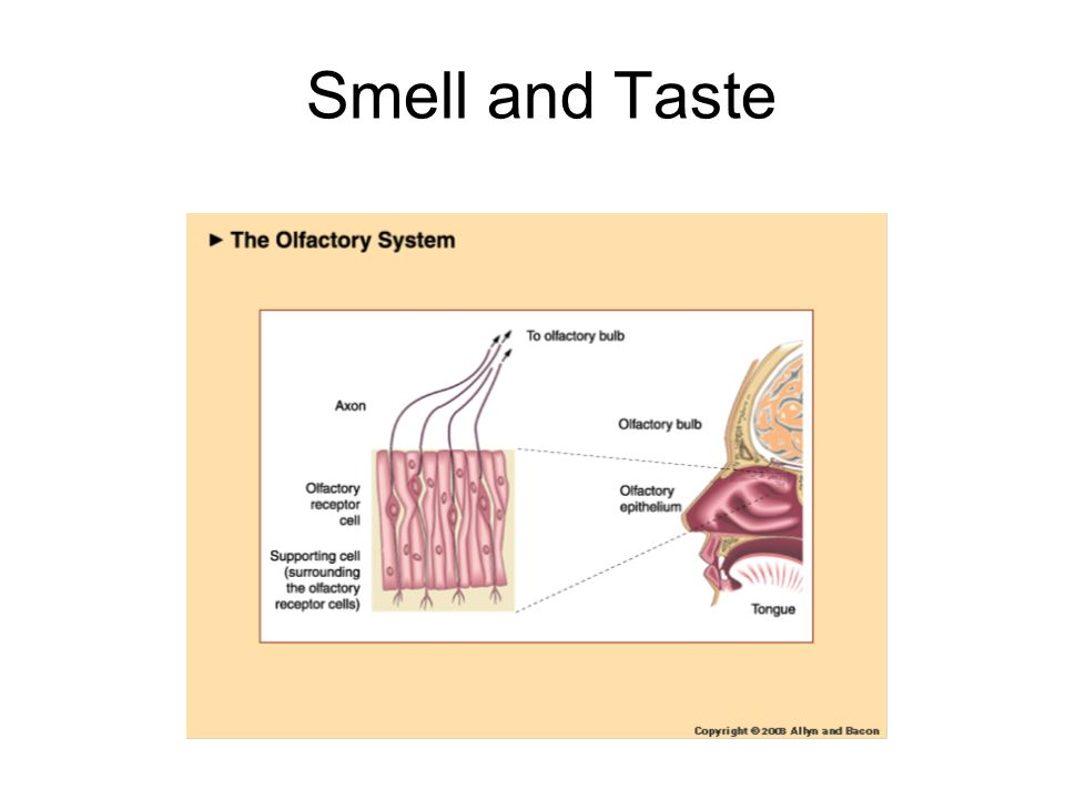 Smell and Taste 2 2