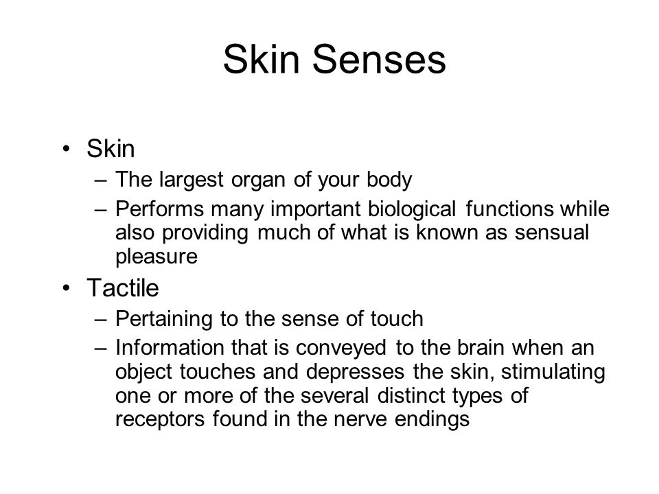 Skin Senses Skin Tactile The largest organ of your body