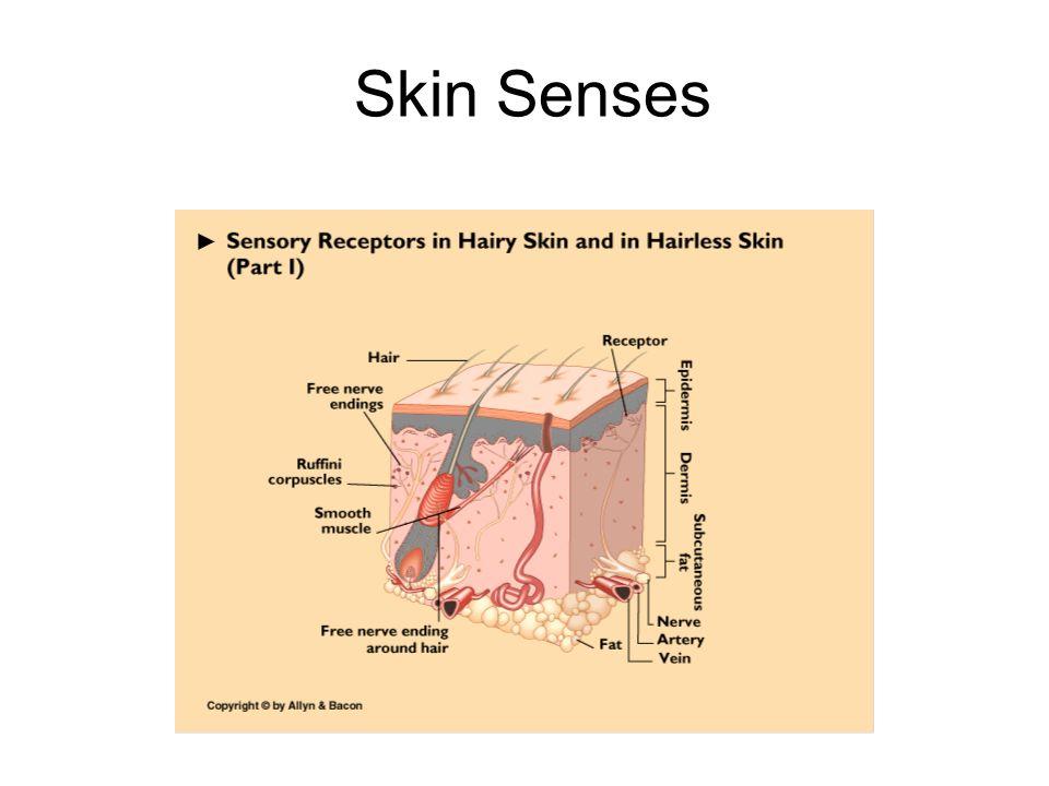 Skin Senses 2 2