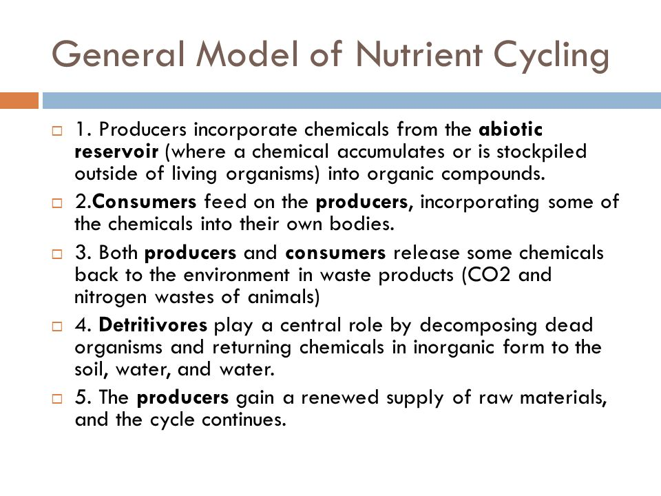 General Model of Nutrient Cycling
