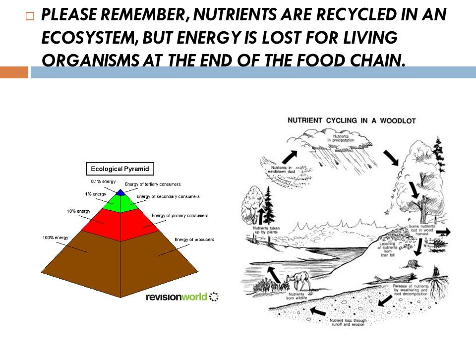 PLEASE REMEMBER, NUTRIENTS ARE RECYCLED IN AN ECOSYSTEM, BUT ENERGY IS LOST FOR LIVING ORGANISMS AT THE END OF THE FOOD CHAIN.
