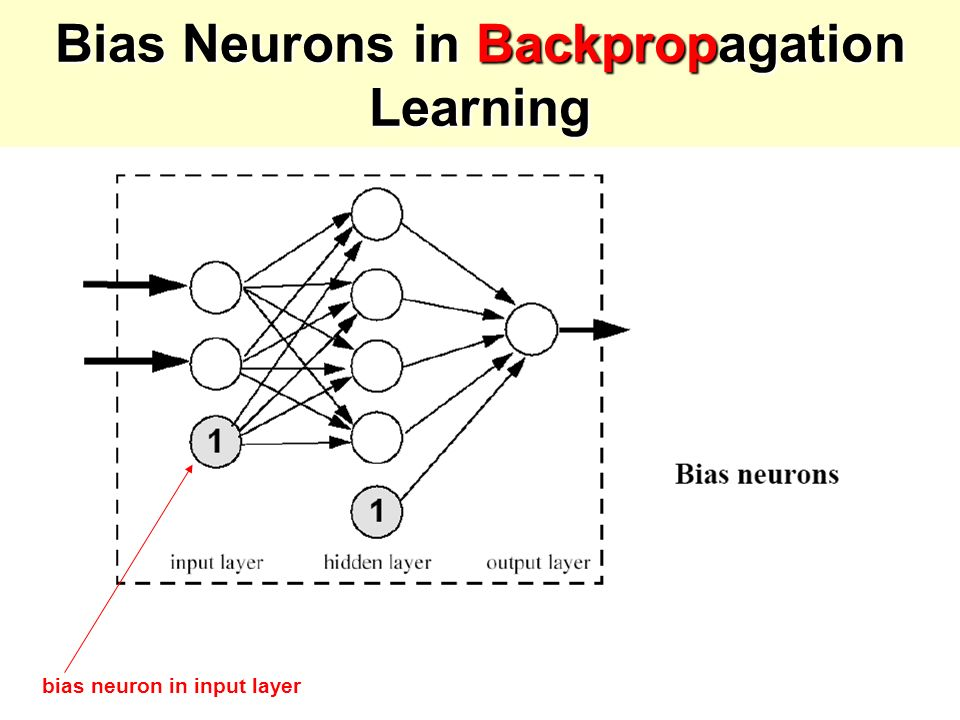 Bias Neurons in Backpropagation Learning