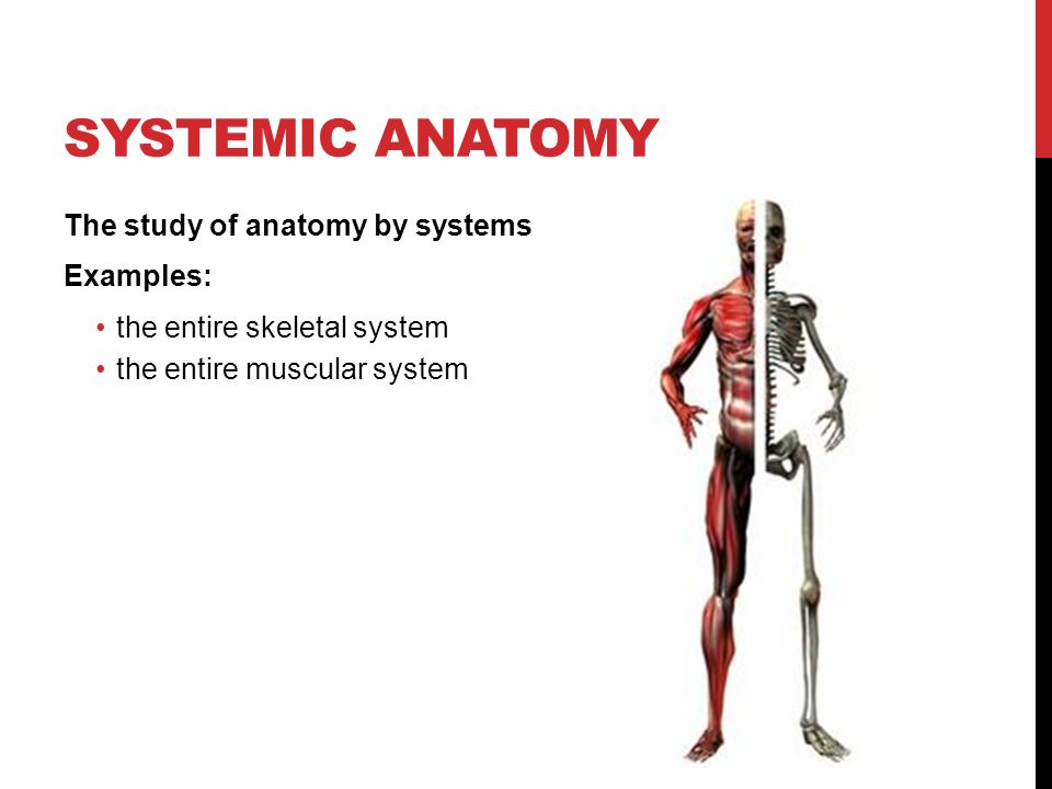 Example Of Anatomy Choice Image - human body anatomy