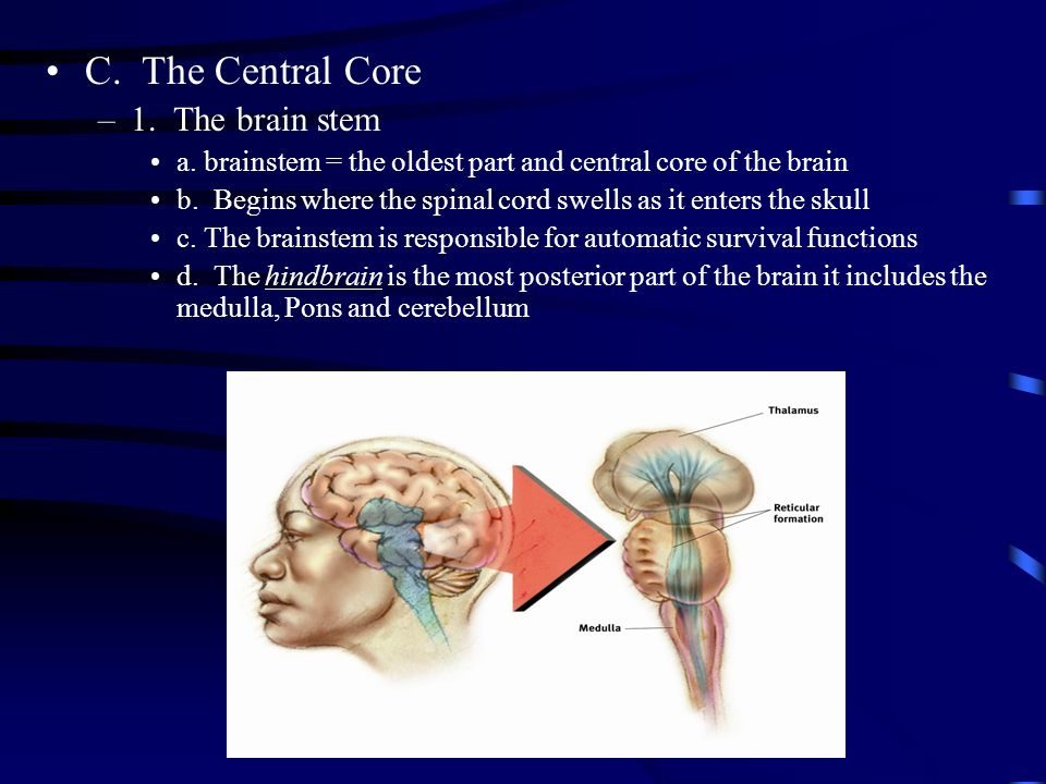 central core of the brain compared to cerebral cortex The cerebral cortex is the part of the brain that functions to make human beings unique distinctly human traits including higher thought, language and human consciousness as well as the ability to think, reason and imagine all originate in the cerebral cortex.