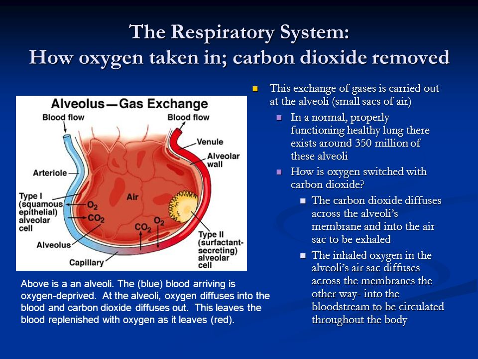 Carbon Dioxide Removal Systems : The systems of body by mindy chen ppt download