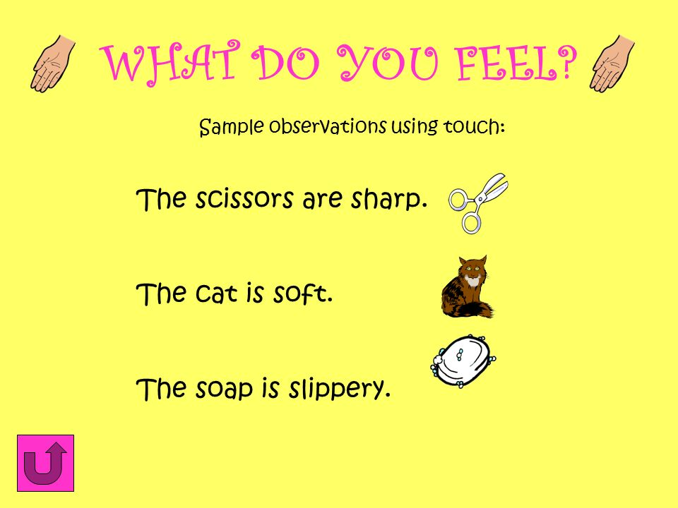 WHAT DO YOU FEEL The scissors are sharp. The cat is soft.