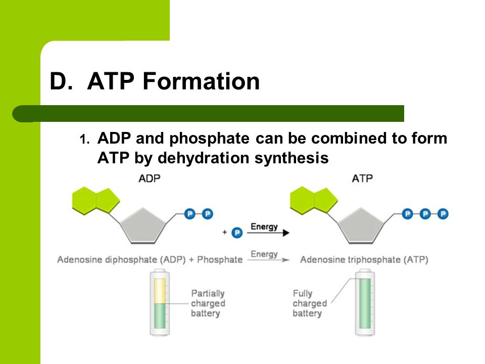 discuss the role of atp in B for 3 of the following situations, discuss the role of atp in completing these examples of cellular work ap biology exam essay (free response).