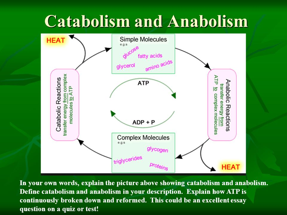 atp an exemplary essay The role of atp living organisms all need energy to live,  atp is an  intermediate molecule between glucose and the cell  this is good example of  how to set out this type of essay and the language used is good however.