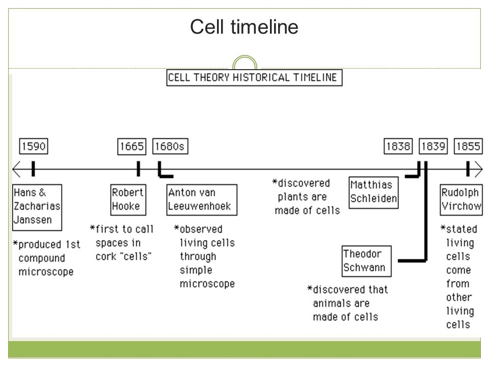 Cells Interactive Notebook- Cell Theory Timeline | Cell theory ...