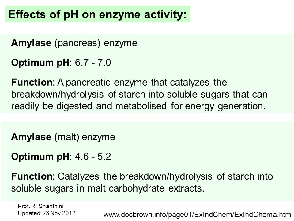 What Are the Effects of Amylase on Starch?