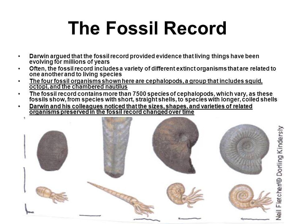 evolution and the fossil record essay The fossil record provides snapshots of the past that, when assembled, illustrate a panorama of evolutionary change over the past four billion years the picture may be smudged in places and may have bits missing, but fossil evidence clearly shows that life is old and has changed over time early .