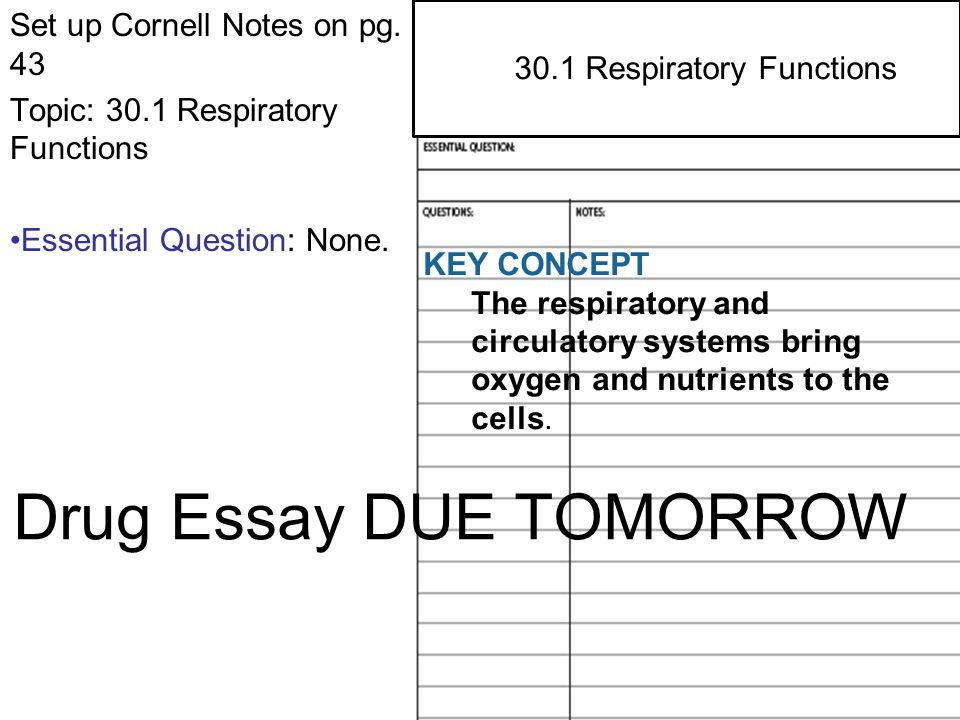function of the respiratory system essay