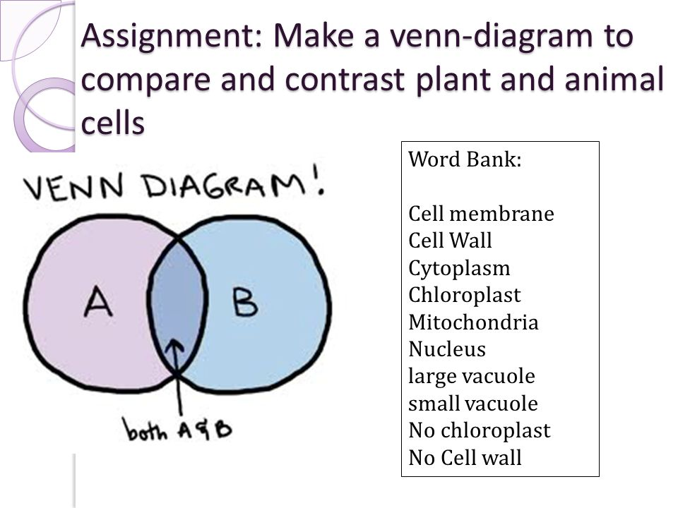 Animal Cells And Plant Cells Venn Diagram Crazywidowfo