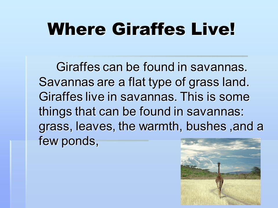 Where Giraffes Live!