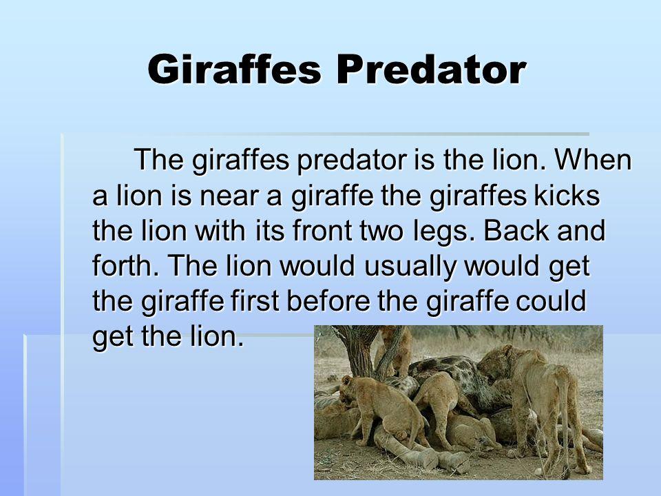 Giraffes Predator