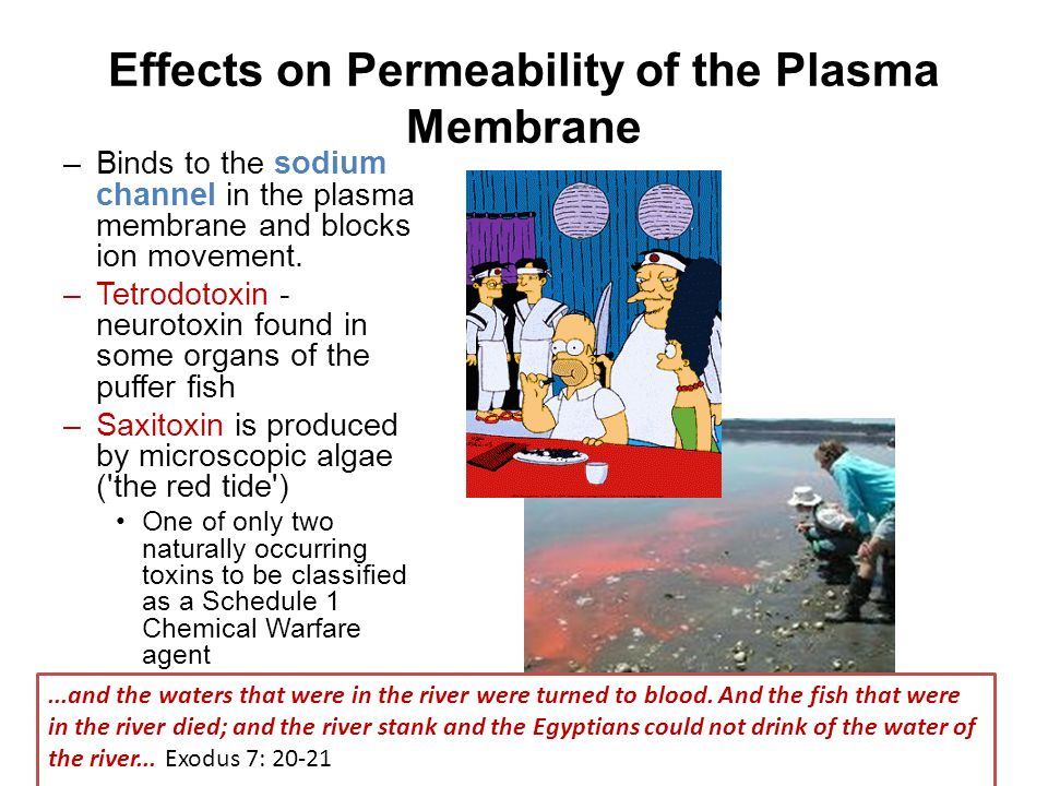 the effect of chemicals on cell membrane permeability All cells are contained by a cell membrane (biomembrane) selectively open to some chemicals and ions but acts as a barrier to undesired components here the focus.