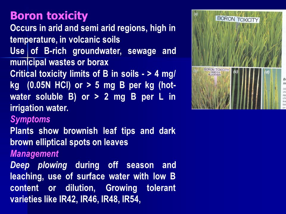 boron toxicity Data on 6,500 pesticides, insecticides and herbicides including toxicity, water pollution, ecological toxicity, uses and regulatory status.