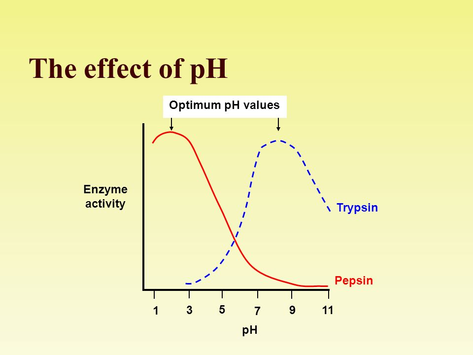 the effect of temperature and ph Investigating the effect of ph on amylase activity temperature variation affects enzyme activity, so results collected on different days are not comparable.