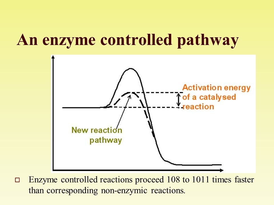 enzyme controlled reactions For this reason, when carrying out enzyme catalysed reactions, it is the initial rate of the reaction that is the most valid measurement to take it will give the rate of the reaction under the desired conditions 1 scientific questions and information research milk powder contains a white protein called casein a white suspension of milk powder clears on the addition of the enzyme.