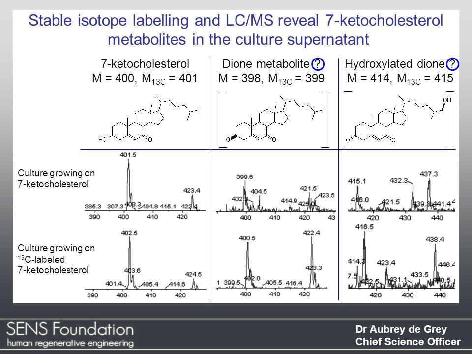 Stable isotope labelling and LC/MS reveal 7-ketocholesterol