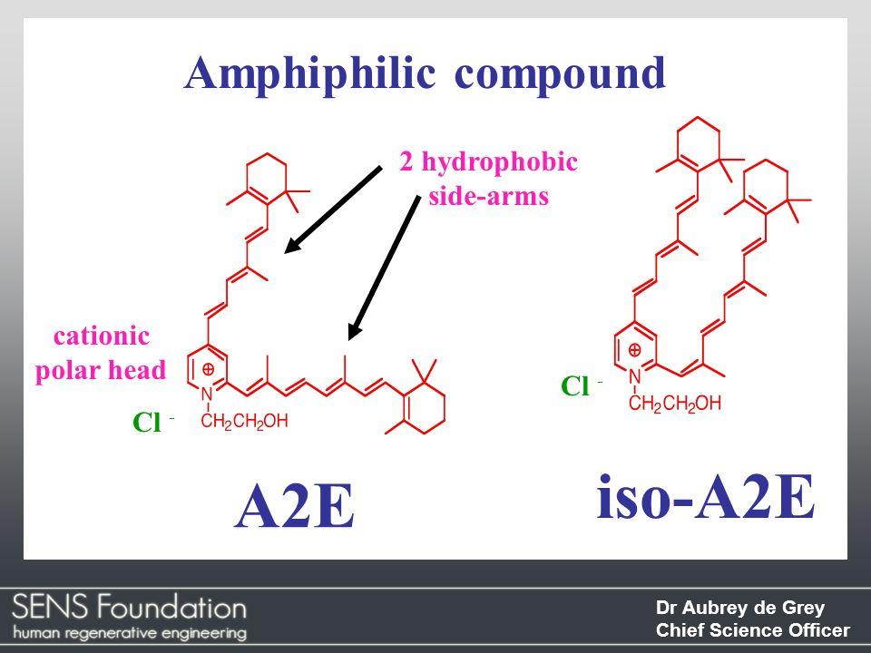 iso-A2E A2E Amphiphilic compound 2 hydrophobic side-arms cationic