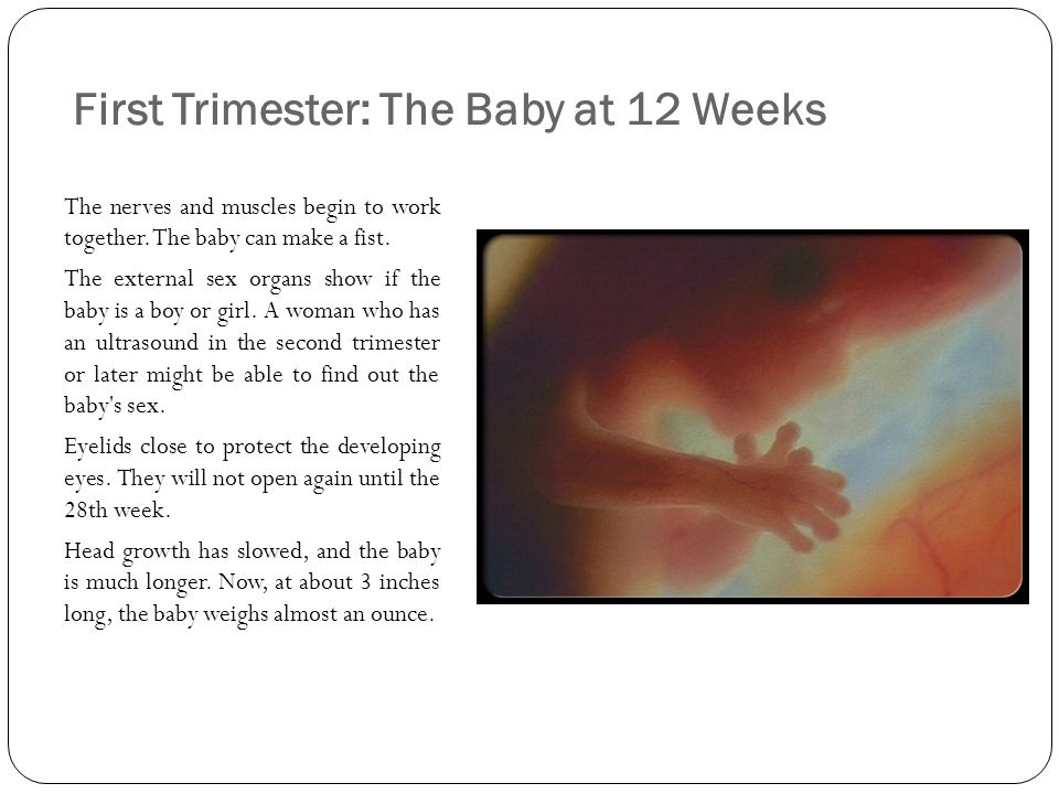 Sex in the first trimester pic 17