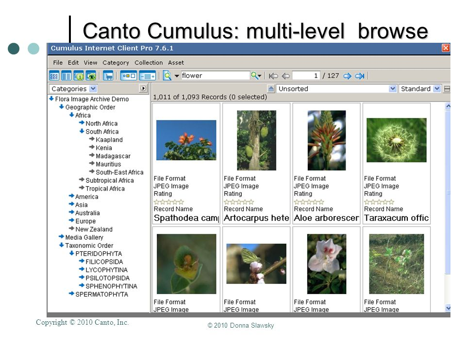 Canto Cumulus: multi-level browse