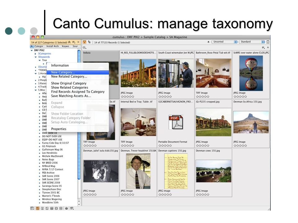 Canto Cumulus: manage taxonomy