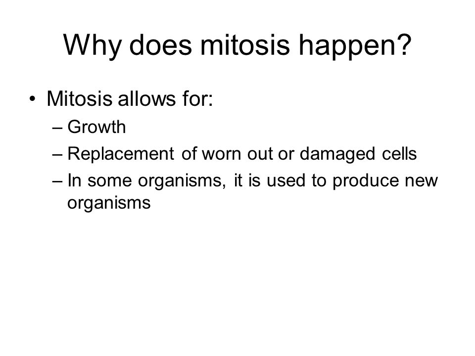 Why is mitosis a form of asexual reproduction Nude Photos 94
