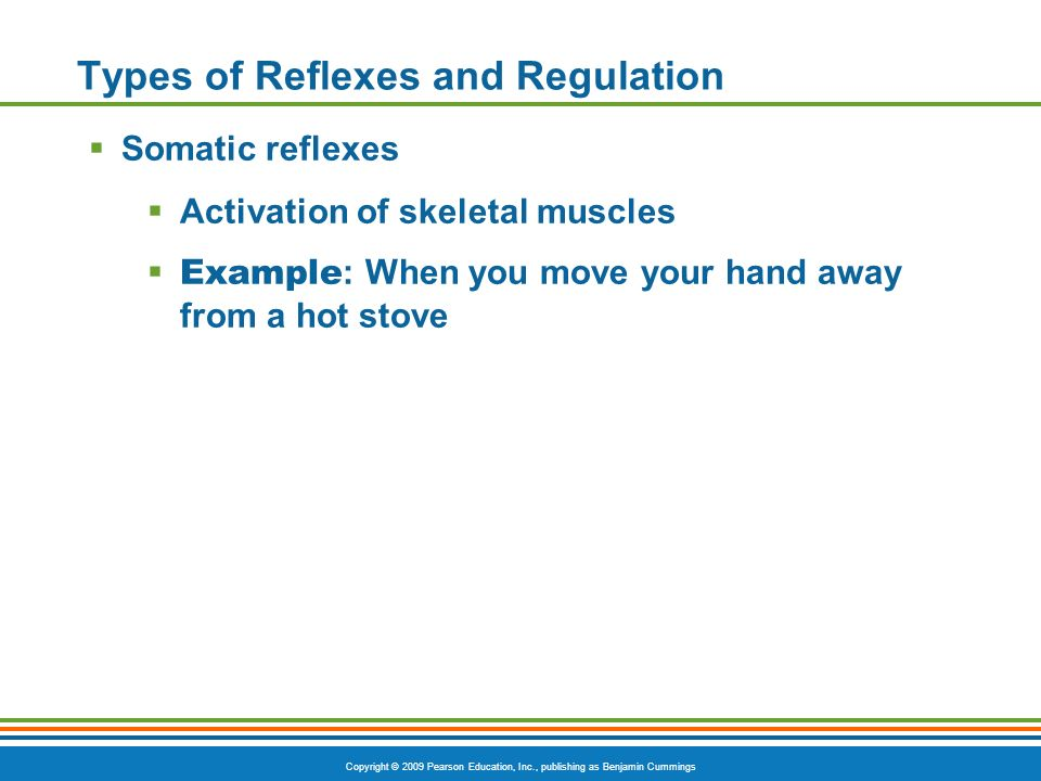 Types of Reflexes and Regulation