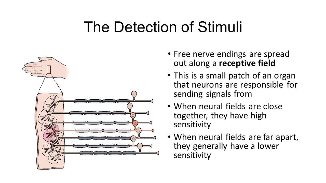 The Detection of Stimuli