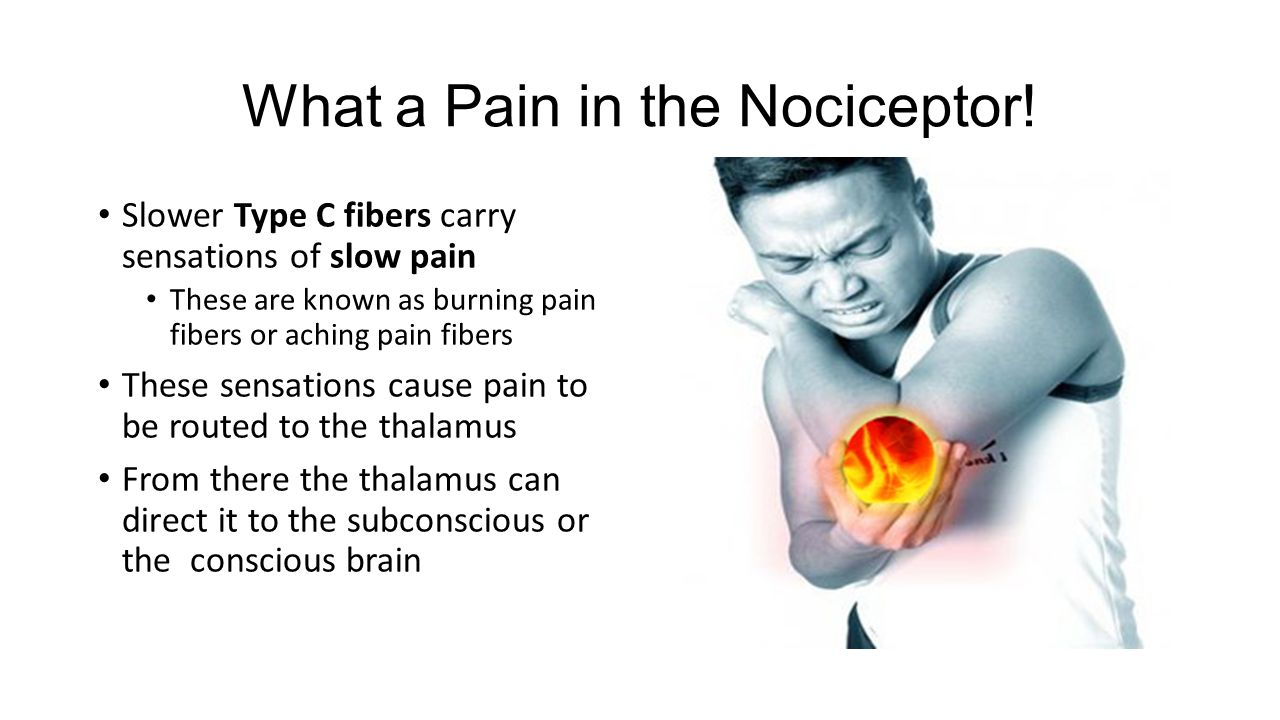 What a Pain in the Nociceptor!
