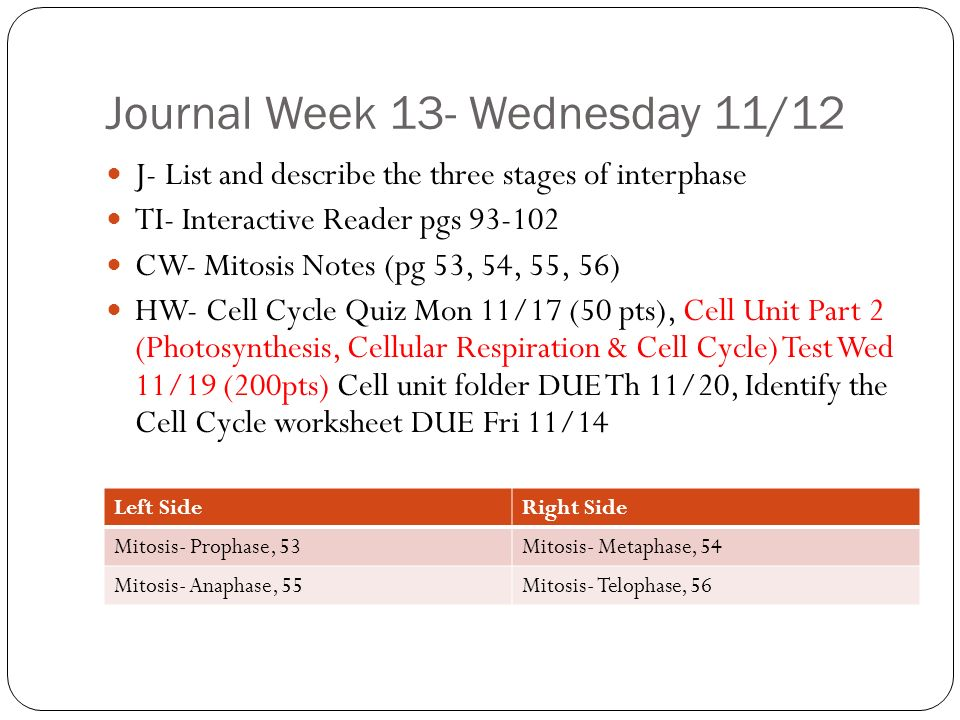 Cell cycle worksheet match the description