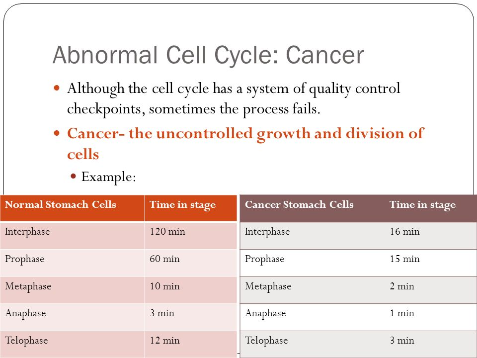 virtual lab the cell cycle and cancer essay The first view describes the cell cycle phases and checkpoints,  biointeractive  has long been known for its award-winning virtual labs now.