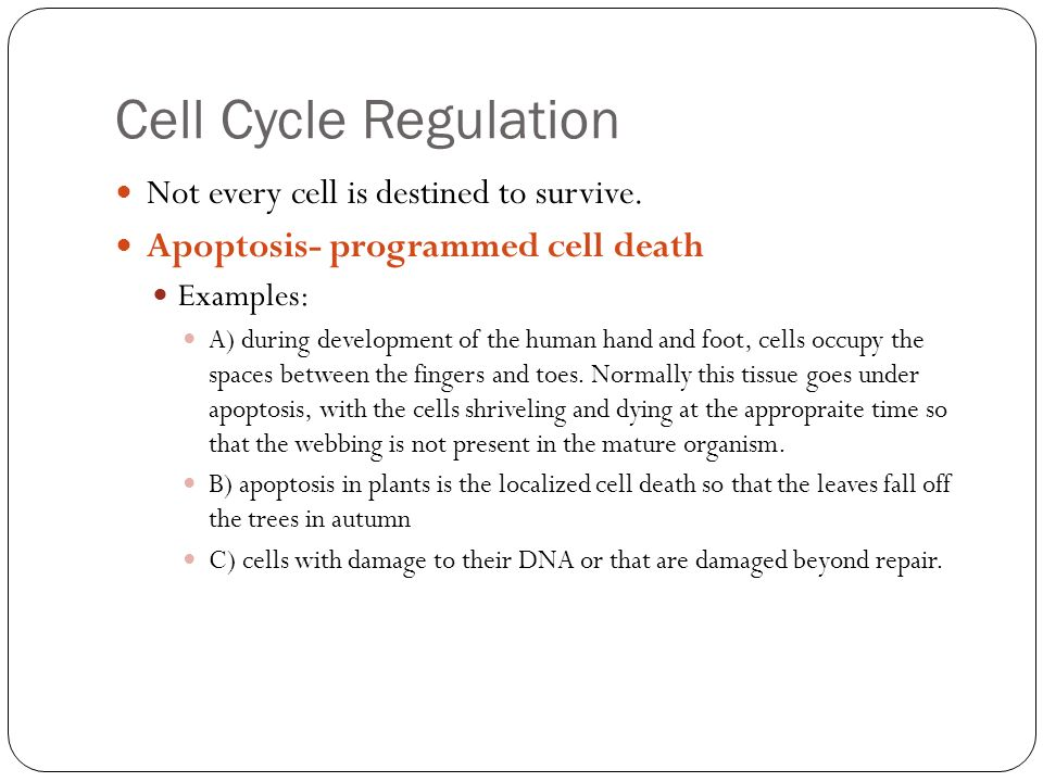 The Cell Cycle Growth Division of Body Cells ppt download – Cell Cycle Regulation Worksheet