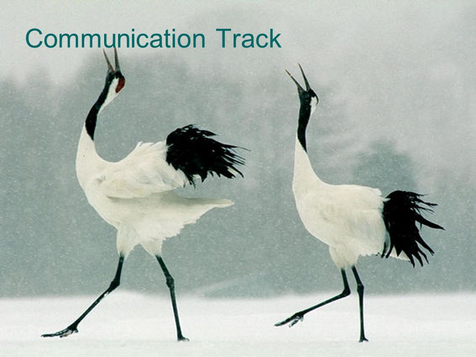 Communication Track