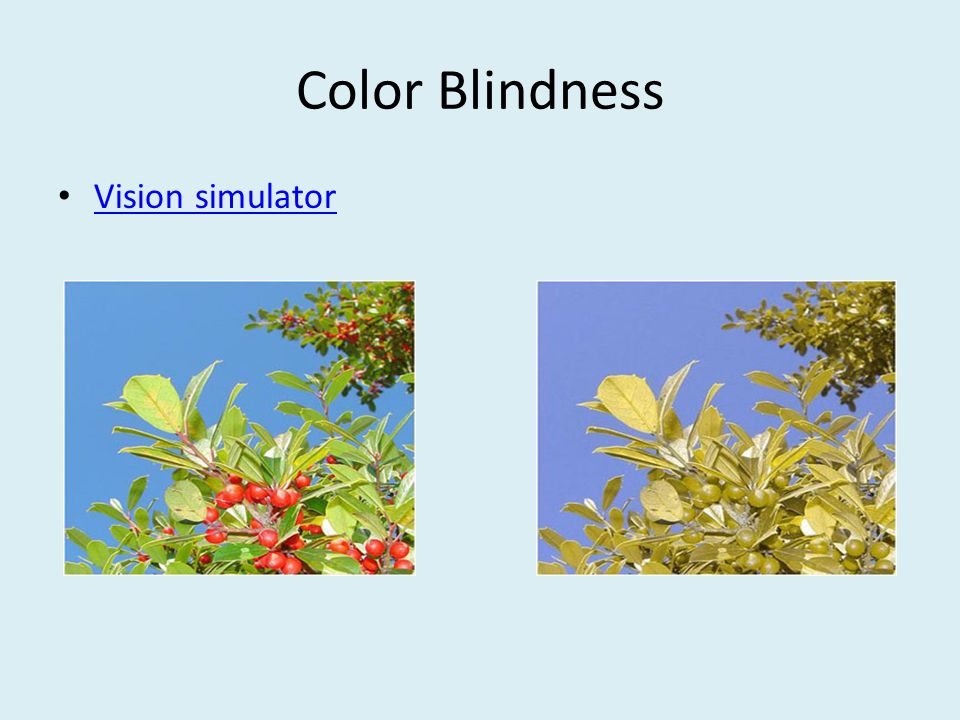 Color Blindness Vision simulator