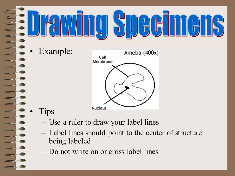 Drawing Lines With A Ruler Ks : Microscopes mrs schmidt ppt video online download