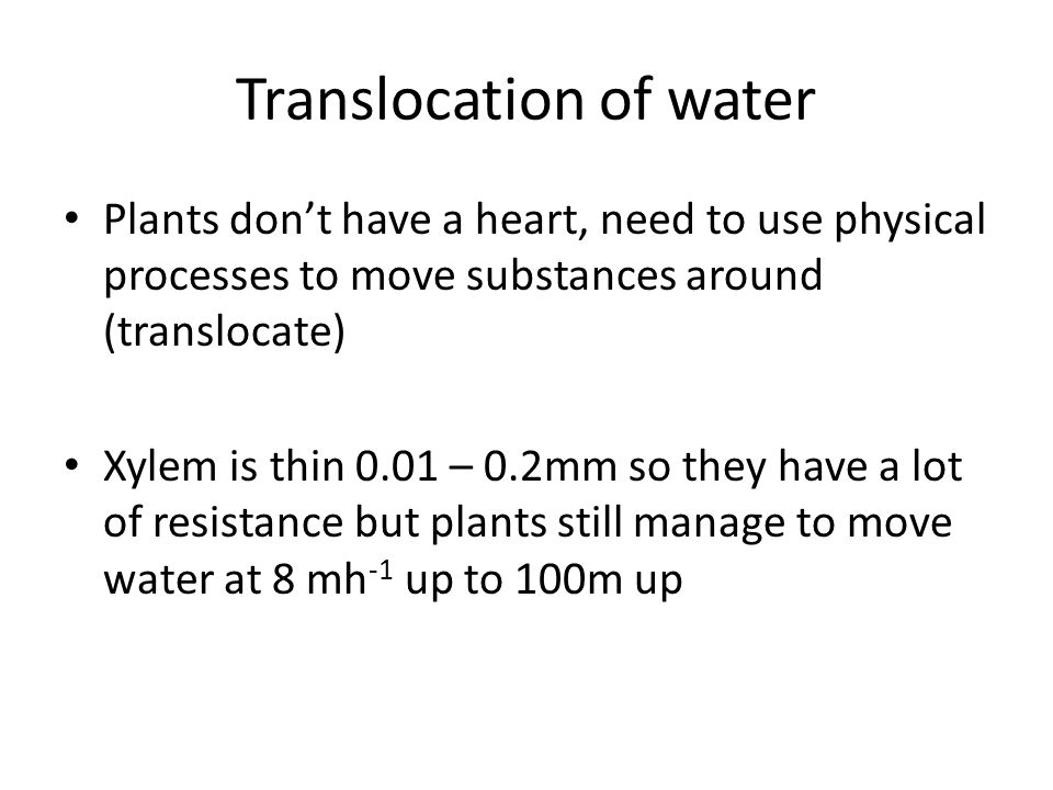 Transport In Plants Ppt Download