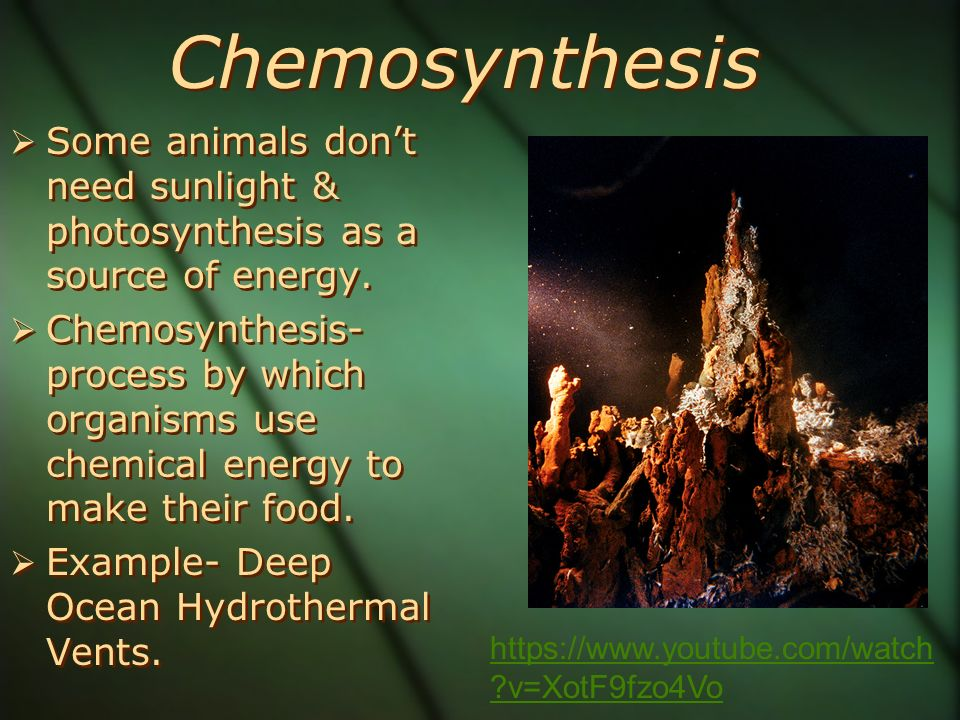 animals use chemosynthesis Chemosynthesis is a process special bacteria use to produce energy without using sunlight what animals live near hydrothermal vents white mat of bacteria :.