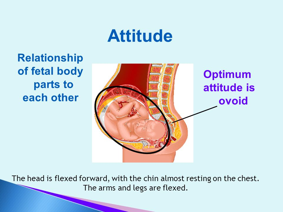 Attitude Relationship of fetal body parts to Optimum each other